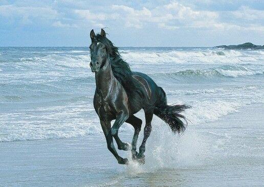конь, бежит, берег моря, волны, лошадь красивая